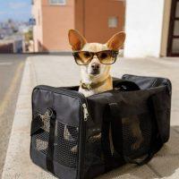 Kleiner Hund in Transportbox
