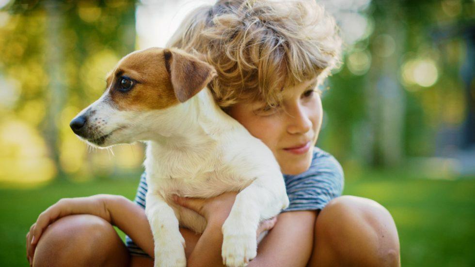 Junge hält seinen geliebten Foxterrier Welpen in den Armen