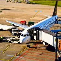 Flugzeug Hund Transport