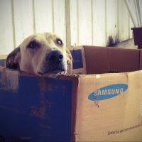 Süßer Hund in Umzugskarton