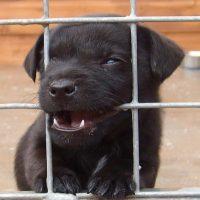 Welpe in einem Hundezwinger
